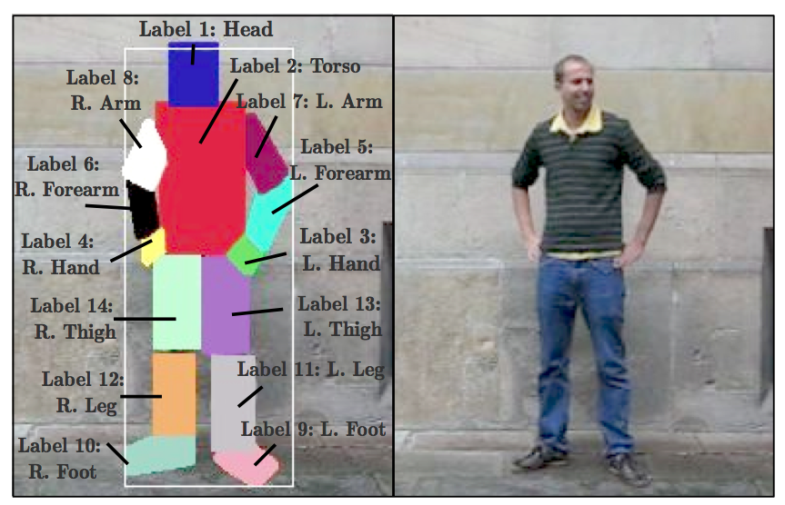 Limbs annotated in the dataset